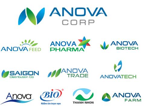 Các công ty thành viên của Anova Corp