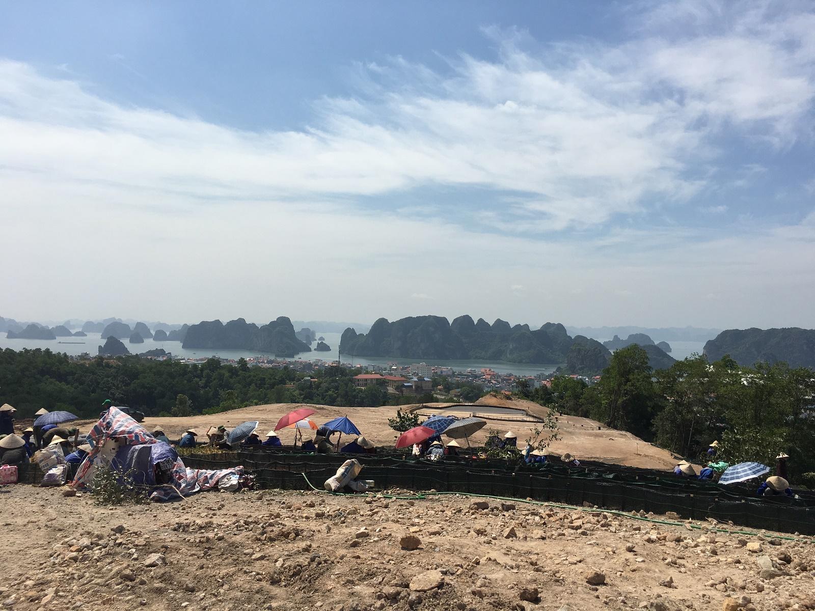 Công nhân đang trồng cỏ tại hố golf nhìn ra vịnh Hạ Long