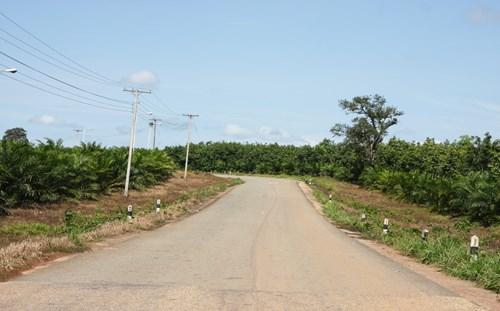 Hàng chục nghìn héc-ta cao su xen lẫn cọ dừa dài tít tắp của Tập đoàn Hoàng Anh Gia Lai nằm dọc 2 bên đường nối vào trung tâm tỉnh lỵ Appateu: Ảnh: Nghi Điền