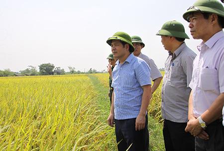 Lãnh đạo tỉnh Thái Bình kiểm tra tình hình thu hoạch lúa mùa tại xã Thụy Dân (Thái Thụy) ngày 17/10. Ảnh: Báo Thái Bình