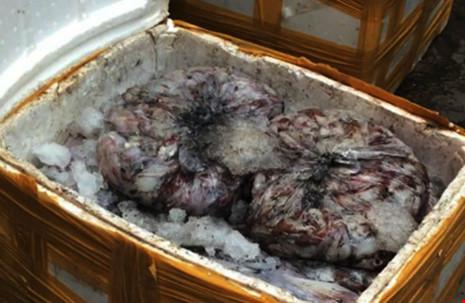 Khoảng 1,2 tấn mực bốc bùi hôi thối được phát hiện trước khi chuyển đi tiêu thụ. Ảnh: TQ.