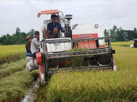 Có chính sách hợp lý về đất đai sẽ thúc đẩy sản xuất hàng hóa phát triển. Trong ảnh: Thu hoạch lúa tại một cánh đồng mẫu lớn ở Hậu Giang. Ảnh: GIA TUỆ