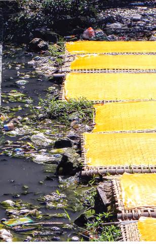 Những giàn miến lao cả xuống bãi nước thải.