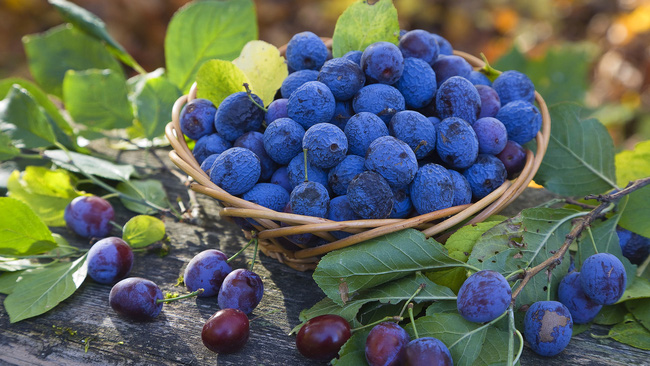 Đồ ăn có màu tím - xu hướng đồ ăn năm 2017 sẽ mang lại cho chúng ta những lợi ích gì? - Ảnh 3.