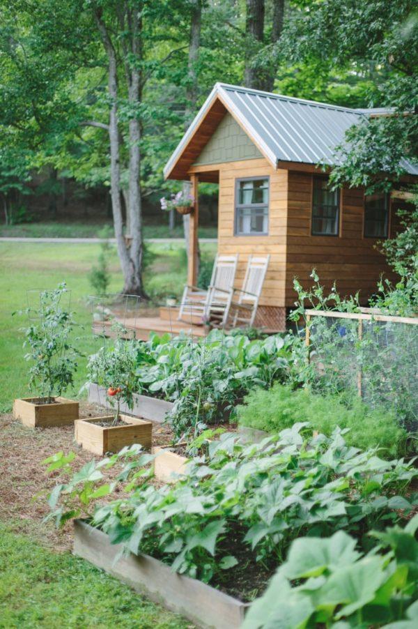 Phía trước nhà còn có cả một vườn đầy rau thỏa mãn nhu cầu rau sạch hàng ngày cho gia đình nhỏ.