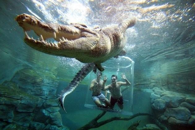 Bạn phải trả 126 USD một khách hoặc 190 USD cho 2 người (trong đó đã có vé vào các điểm tham quan khác ở Crocosaurus Cove) để trải nghiệm cảm giác toát mồ hôi trong Lồng tử thần.