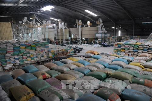 Gia hạn thỏa thuận về thương mại gạo với Philippines. Ảnh: Lê Sen/TTXVN.