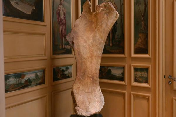 Phần xương đùi của khủng long bạo chúa