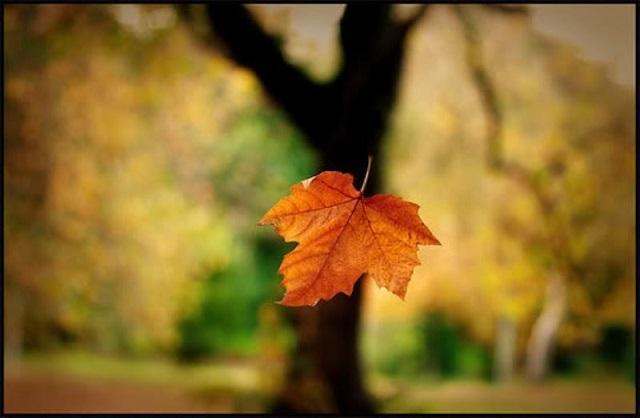 Tiền đã rơi như lá mùa thu...
