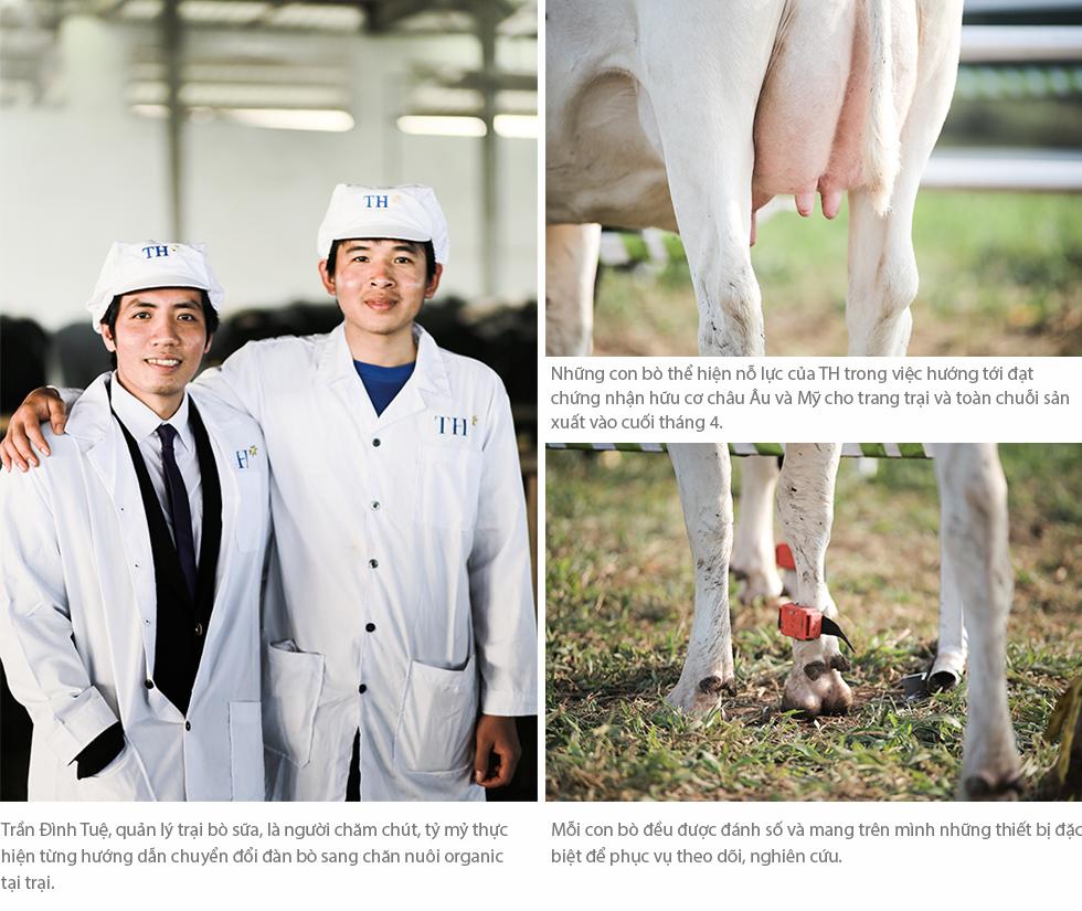 Cuộc sống như mơ của những cô bò hạnh phúc trong trang trại TH True Milk - Ảnh 3.