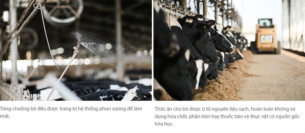Cuộc sống như mơ của những cô bò hạnh phúc trong trang trại TH True Milk - Ảnh 6.