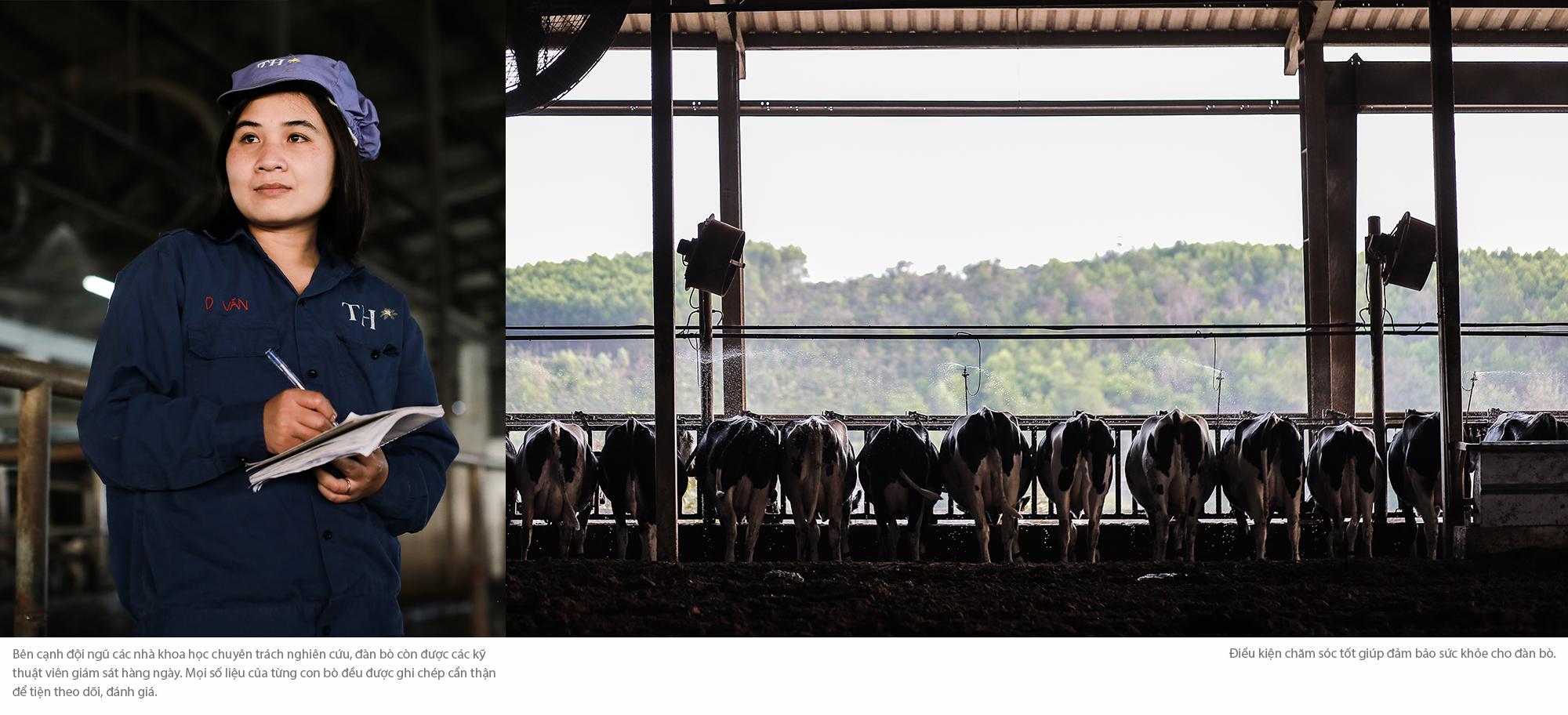 Cuộc sống như mơ của những cô bò hạnh phúc trong trang trại TH True Milk - Ảnh 9.