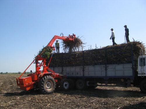 Nhà máy Đường Biên Hòa Tây Ninh thu hoạch mía tại các vùng nguyên liệu