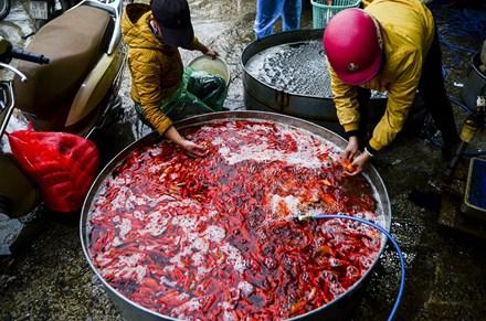 Đây là chợ cá đầu mối lớn nhất của Hà Nội, buôn bán các loại cá vàng trong dịp cúng ông Công, ông Táo.