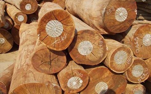 Ngành gỗ trong nước đang lo thiếu nguyên liệu (Ảnh minh họa: KT)
