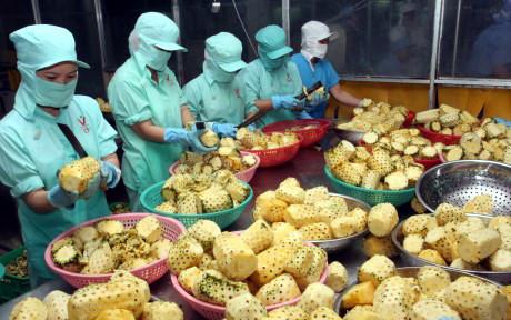 Nhóm hàng nông sản sẽ là một trong những mặt hàng xuất khẩu chủ lực của Việt Nam năm 2017. (Ảnh minh họa: KT)