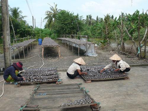Người làm khô cá bổi lỗ nặng trong mùa Tết vừa qua Ảnh: Duy Nhân