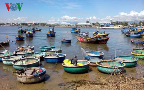 Ngư dân đánh bắt gần bờ phấn khởi vì giá hải sản tăng cao.