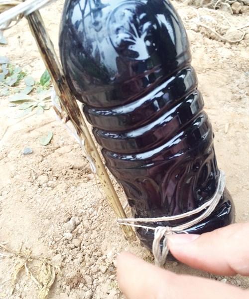 Mẫu nước thải do BQL KCN Lai Vu lấy từ khu vực xả thải của Cty Pacific Crystal.