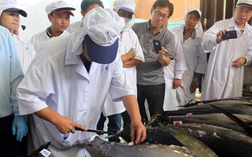 Xuất khẩu cá ngừ của Việt Nam sang Nhật Bản giảm xuống vị trí thứ 6.(Ảnh minh họa: KT)