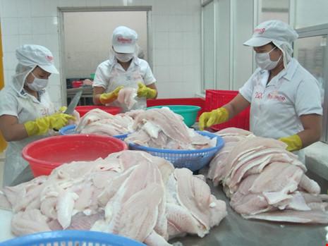 Quy trình nuôi trồng, chế biến xuất khẩu cá tra Việt Nam đều đạt những chứng nhận quốc tế về chất lượng và bảo vệ môi trường