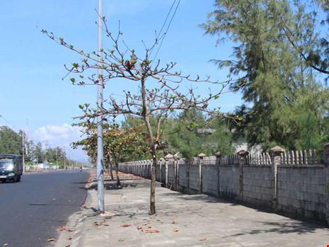 Công ty Thuận Thảo gần như bỏ dự án, khu đất trở nên hoang tàn giữa những bức tường rào. Ảnh: TL