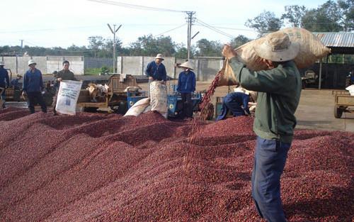 Giá trị xuất khẩu cà phê đạt 3,3 tỷ USD