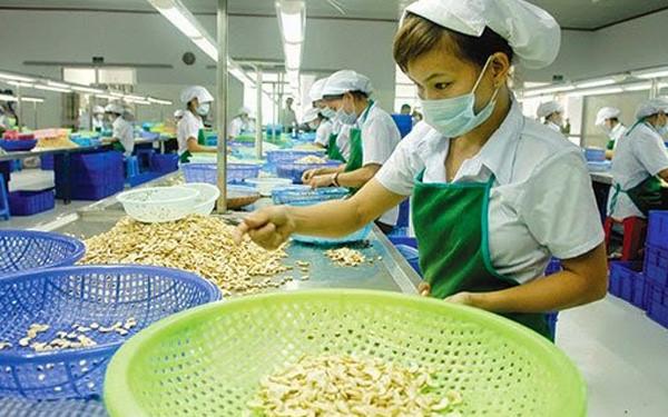 Hạt điều xuất khẩu thu về 2,8 tỷ USD