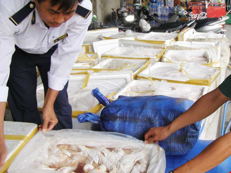 Cơ quan thú y TP.HCM phát hiện trường hợp vận chuyển thịt thối từ tỉnh đưa vào TP. Ảnh: TRẦN NGỌC
