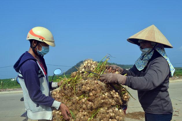 Nông dân đưa tỏi về nhà bảo quản.