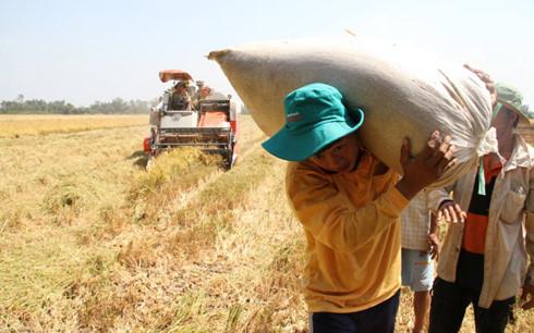 Nông dân quanh năm bán mặt cho đất mà vẫn không khá lên được (Ảnh minh họa: KT)