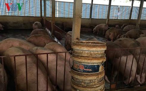 Giá lợn hơi giảm sâu khiến nông dân điêu đứng