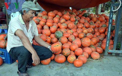 Ông Phạm Sơn thẫn thờ nhìn đống bí đỏ chờ người mua.