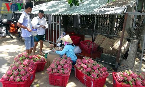 Cơ sở đóng hàng tiêu thụ nội địa của chị Nguyễn Thị Hà gần ngã tư Phú Hội, TP Phan Thiết, tỉnh Bình Thuận.