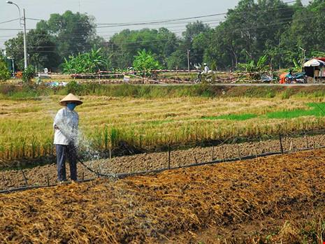 Nhiều khu đất nông nghiệp ở huyện Bình Chánh, TP.HCM chưa thể tách thửa từ khi chuyển việc cấp giấy chứng nhận về Sở TN&MT TP. Ảnh: HTD
