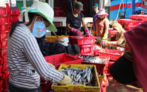 Việc liên kết chuỗi giá trị là cần thiết đối với ngư dân, trong đó khâu chế biến giữ vai trò quan trọng.