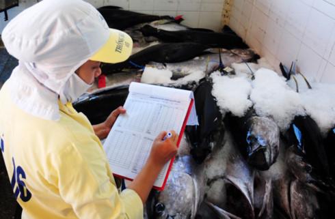 Thu mua cá ngừ đại dương ở Bình Định. Ảnh: M.Hoàng/Zing