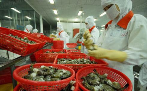 Nhiều thách thức cho ngành thủy sản Việt Nam trong cả ngắn và dài hạn.(Ảnh minh họa: KT)