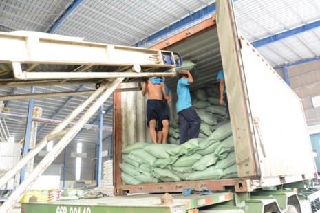 Bốc xếp gạo xuất khẩu