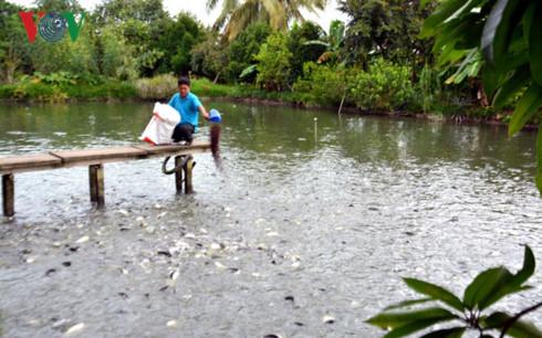Ông Lê Văn Bon chăm sóc ao cá.