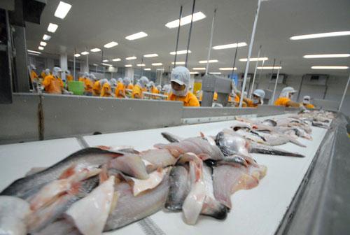Mỹ sẽ kiểm tra 100% lô cá tra nhập khẩu từ Việt Nam Ảnh: Ngọc Trinh