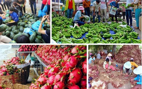Thời gian qua nhiều loại nông sản phải nhờ người dân giải cứu