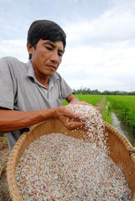 Nông dân sẽ khó khăn hơn nếu giá phân bón tăng Ảnh: NGỌC TRINH