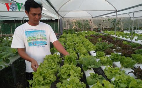 Xây dựng nông trại áp dụng công nghệ cao sản xuất rau của anh Nguyễn Văn Phong, chủ trang trại Cần Thơ Farm, phường Long Hòa, quận Bình Thủy, TP. Cần Thơ (Ảnh: Hữu Trãi)
