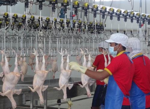 Quy trình sản xuất khép kín sẽ giúp cho việc truy xuất nguồn gốc gia cầm thuận lợi hơn.