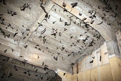 Chim yến được nuôi trong nhà ở Ninh Thuận