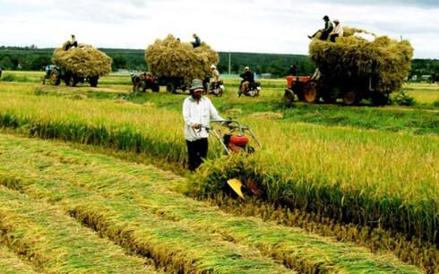 Chính sách hạn điền được cho là một trong những nguyên nhân cản trở phát triển sản xuất nông nghiệp quy mô lớn (ảnh minh họa: KT)