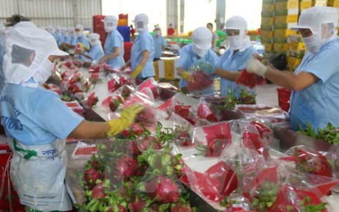 Australia là thị trường có tiềm năng cho các doanh nghiệp xuất khẩu của Việt Nam. (Ảnh minh họa: KT)