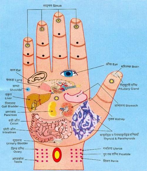 Bàn tay là bộ phận quan trọng kết nối với nội tạng (Ảnh minh họa)