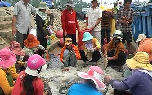 Một cảnh mua bán hải sâm tại Quảng Ngãi (Ảnh: Dân Việt)
